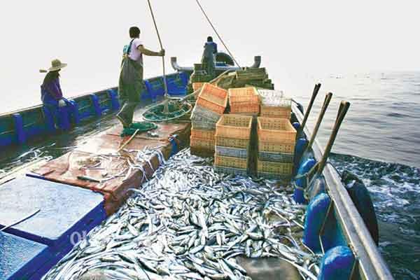 kosakata pekerjaan perikanan fishing pic