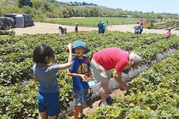 Kosakata Bahasa Korea Tentang 'Pekerjaan' - kosakata korea pekerjaan pertanian image
