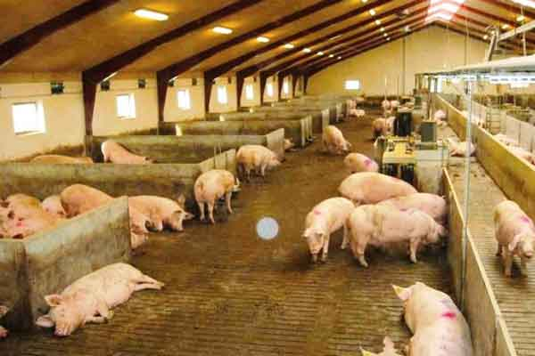 Kosakata Bahasa Korea Tentang 'Pekerjaan' - kosakata pekerjaan peternakan babi image