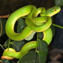 karakter kepribadian ular jpg