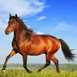 Kuis Kepribadian Karakter Diri Anda Tentang Cinta - pribadi kuda image