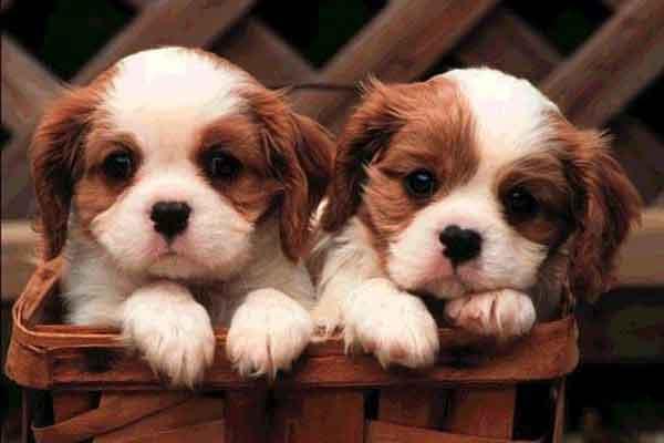 kosakata korea bilangan 2 ekor hewan anak anjing img