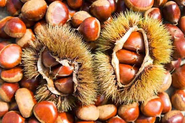kosakata bahasa korea buah kastanye chestnut img