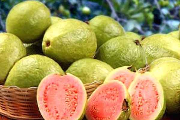 kosakata buah buahan jambu img