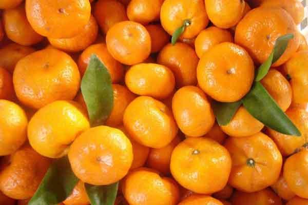 kosakata bahasa korea buah jeruk mandarin img