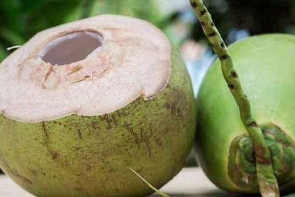 kosakata bahasa korea buah kelapa img