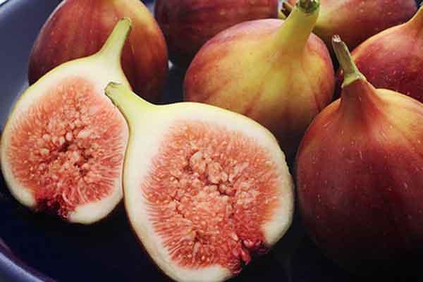 kosakata bahasa korea buah tin ara img
