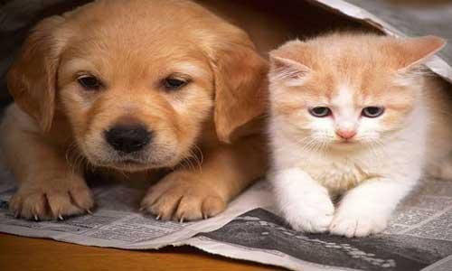 momen romantis kucing dan anjing img