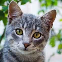 karakter kepribadian kucing jpg